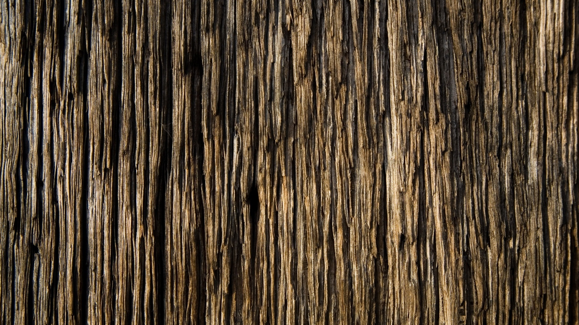wood-_texture546-1